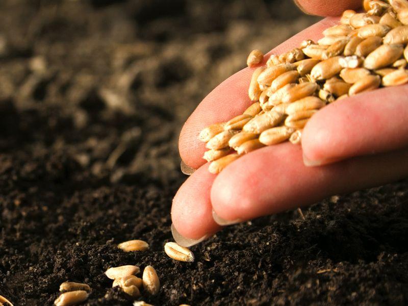 Certified seed (Image Credit - Google)