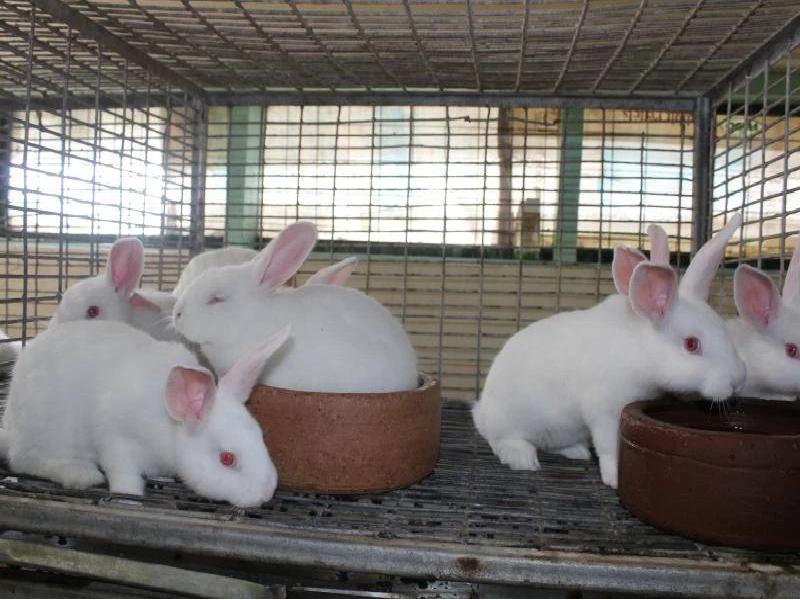 Rabbit Farm (Image Credit - Google)