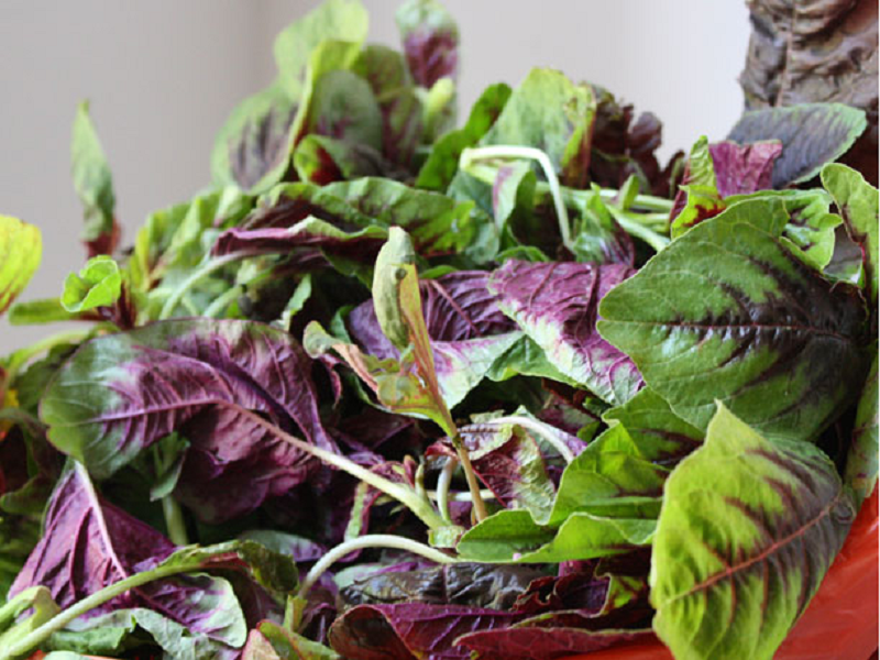 Red spinach (Image Credit - Google)