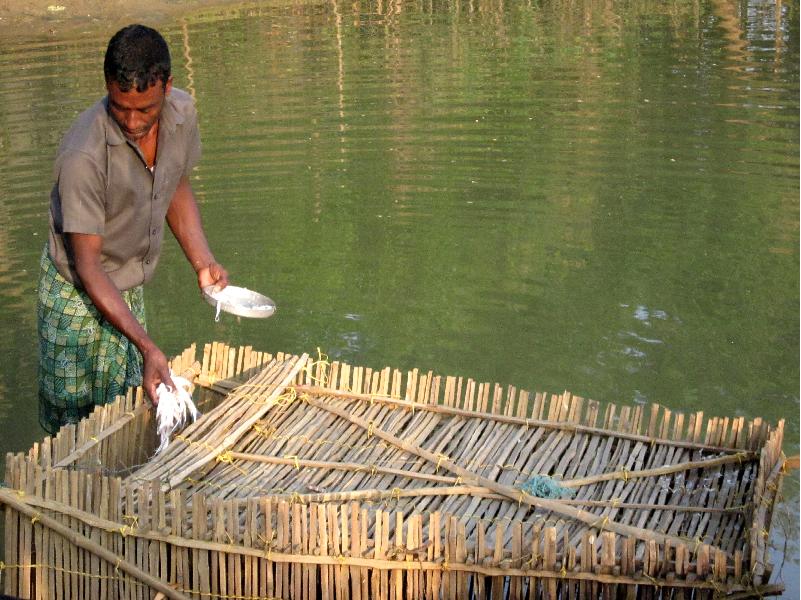 Crab Farming in pond (Image Credit - Google)