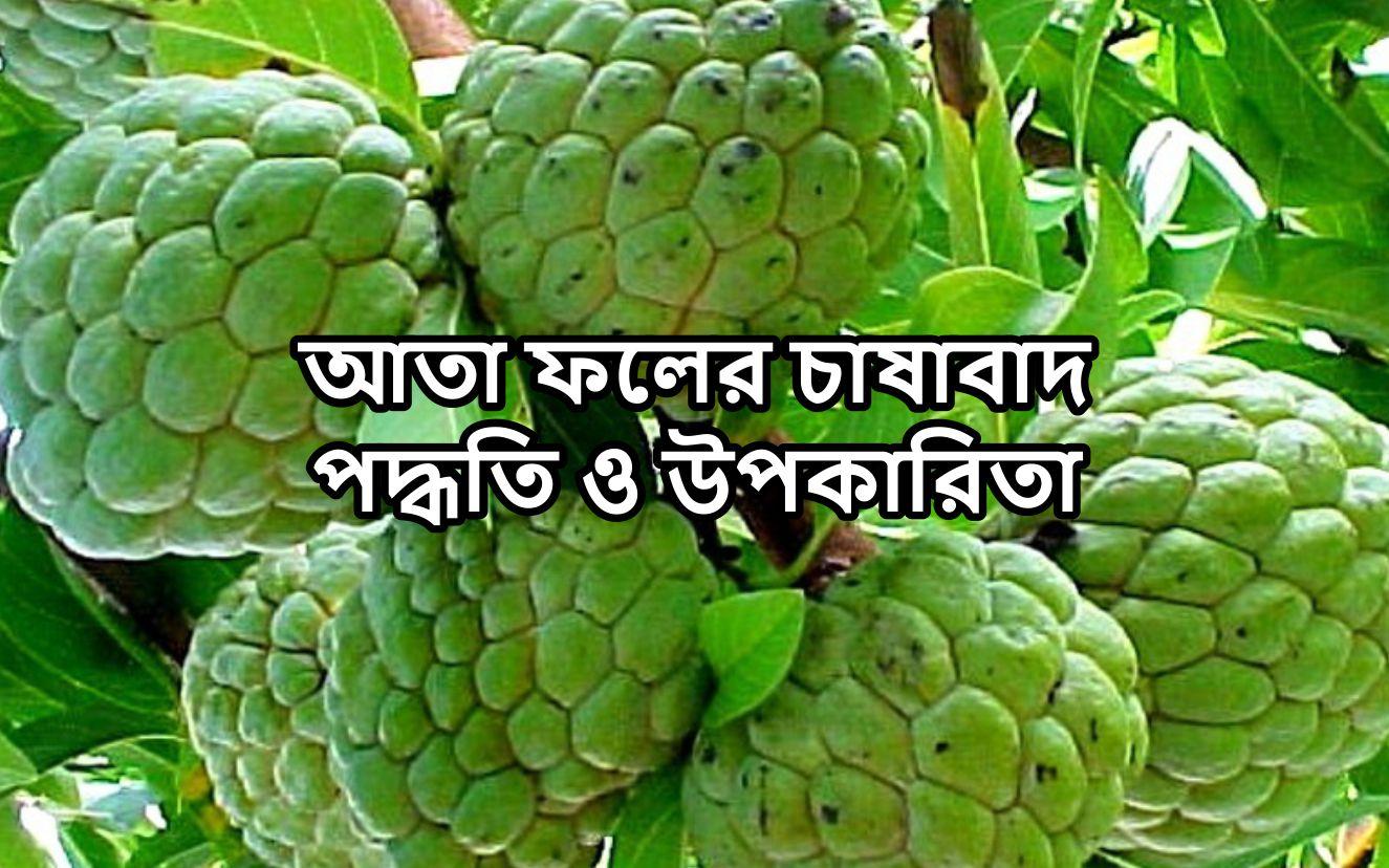 বহুগুন সম্পন্ন আতা ফলের চাষাবাদ:- রোগ ও তার সহজ প্রতিকার ব্যবস্থা