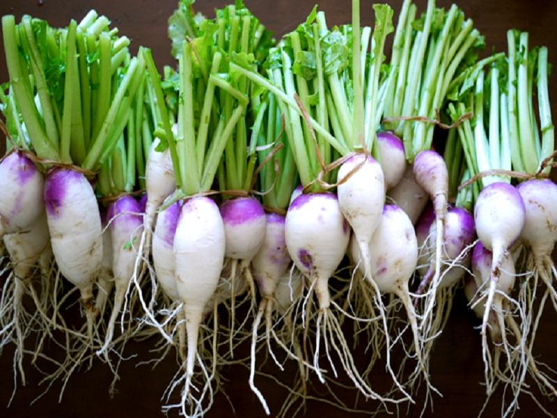 Turnip (Image Credit - Google)