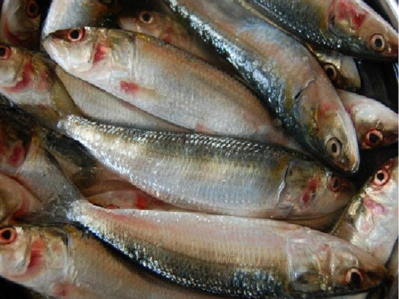 Fish detoxify (Image credit - Google)