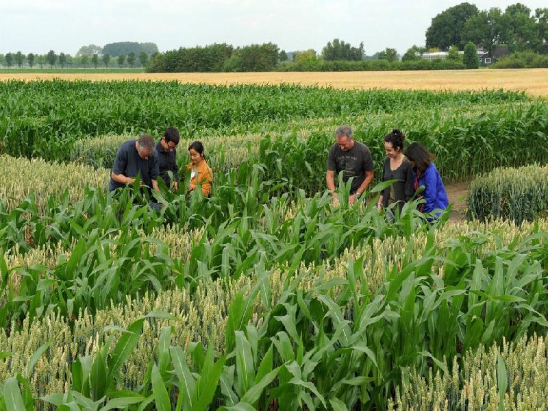 Mixed farming (Image Credit - Google)