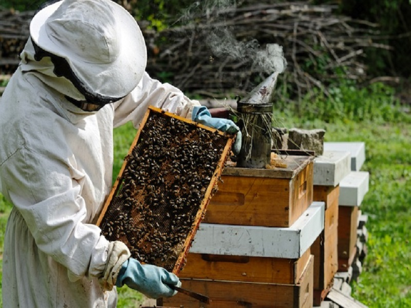 honey-bee (Image Credit - Google)