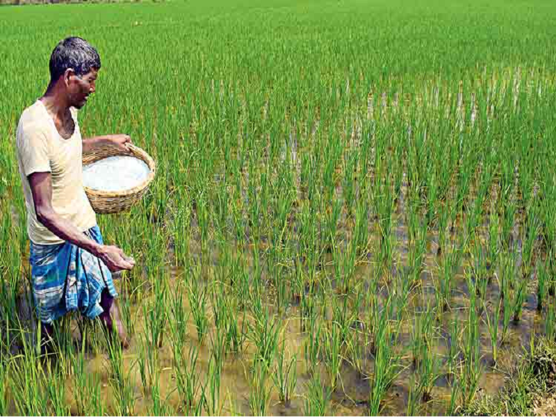 Fertilizer application in the field (Image Credit - Google)